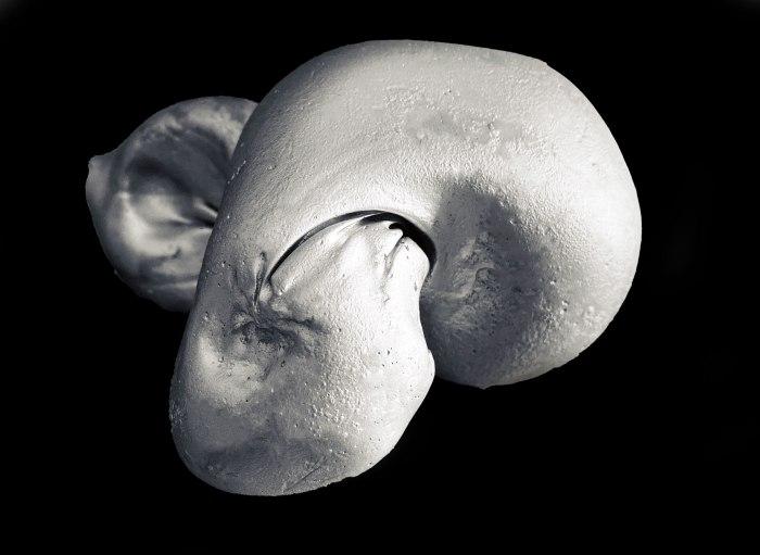 Organic Plaster Sculptures